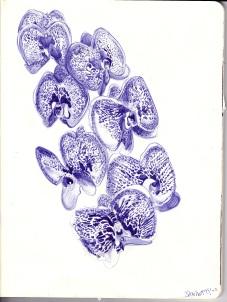 Floral Sketchbook - Orchids, pg. 1