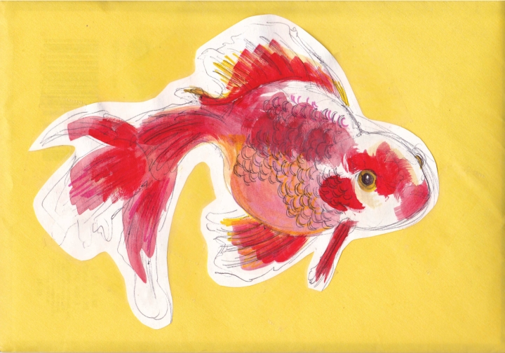 fancy goldfish card