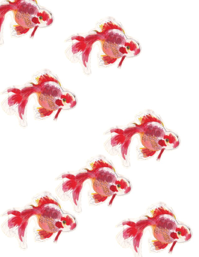 mama's fancy goldfish1