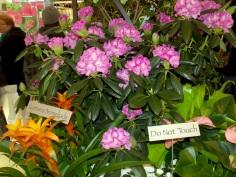 The Secret Garden exhibit at Macy's, New York